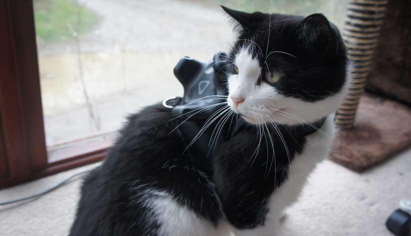 El gato que se introdujo en la realidad virtual